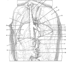 loggia-renale